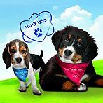 """2 כלבים על רקע שמיים וכיתוב """"כלבי ליטוף"""""""